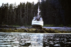 Motor Vessel Anna Jackman. Brothers Islands, Stephens Passage, Alaska. September, 1979.