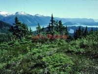 Thomas Bay and Frederick Sound, Southeast Alaska. August 1982.